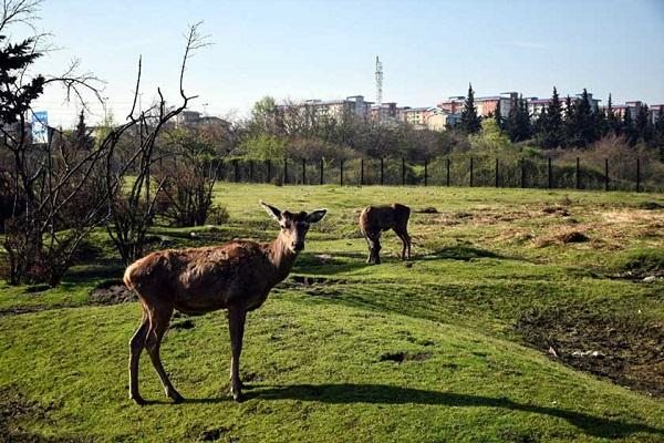 Le refuge de la faune Lavandevil