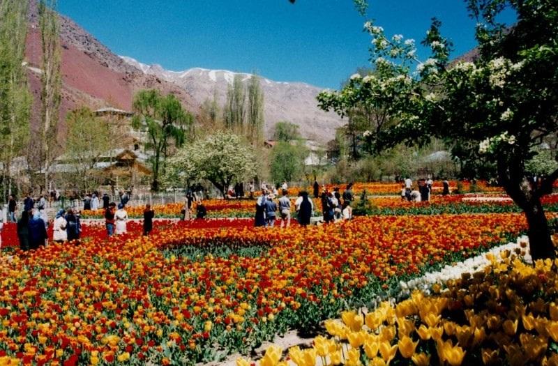 Festival des tulipes en Iran