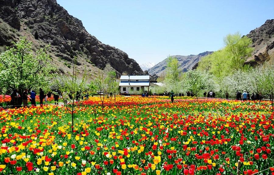 Le jardin des tulipes de Gachsar