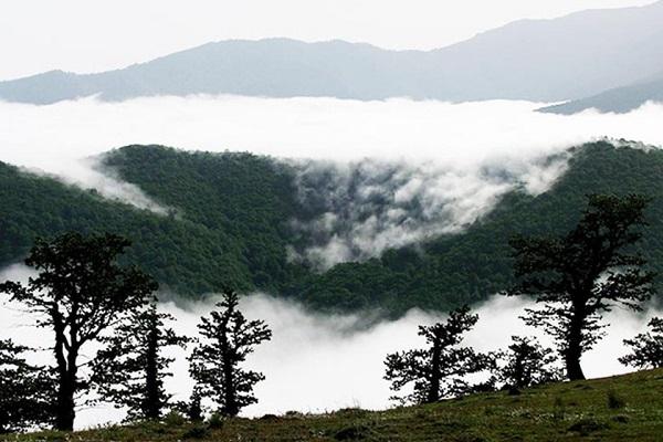 Forêt de nuages
