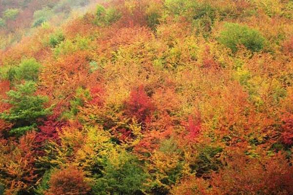forêt Nahar Khoran