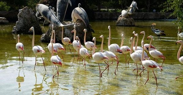 Jardin des oiseaux Ispahan