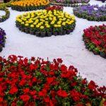 Jardin de fleur Mahallat