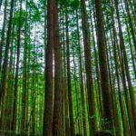Forêts Iran